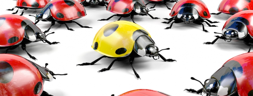 Yellow ladybird located in space surrounded by a cluster of red ladybirds
